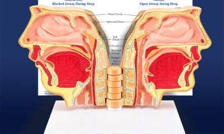 Breathing Anatomical Model