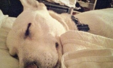 71% of Pet Owners Sleep with Pets in Bedroom