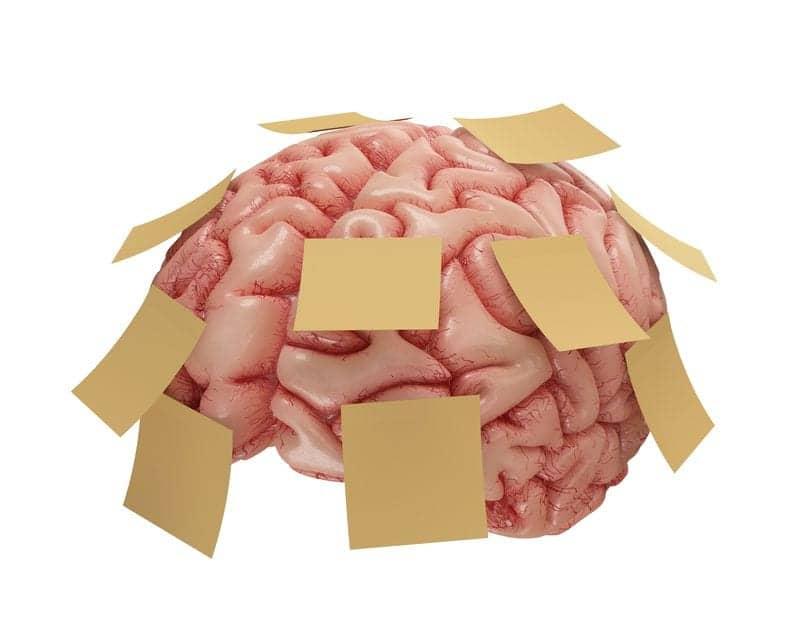 "Sleep May Reduce Brain's ""Forgetting"" Signal"