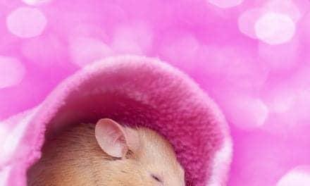 Jet Lag-like Sleep Disruptions Spur Alzheimer's Memory Loss