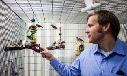 WKU Professor Studies Songbirds and Sleep Patterns