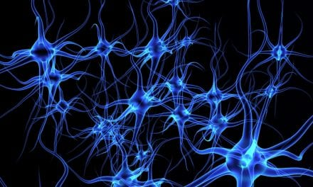 Researchers Reveal Network of Circadian Neurons that Communicate to Re-establish Synchronization