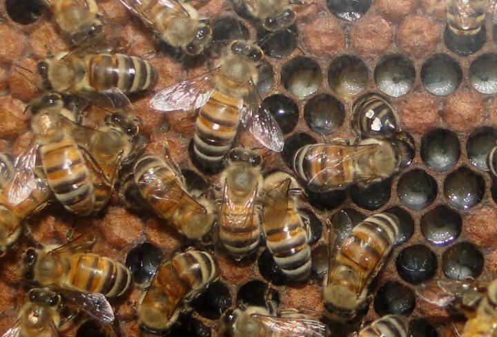 Pollinators: Neonicotinoid Pesticides Stop Bees and Flies From Getting a Good Night's Sleep