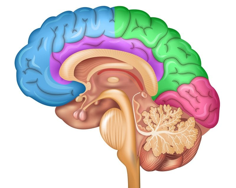 Mathematical Model Could Improve Understanding of Memory Consolidation During Deep Sleep