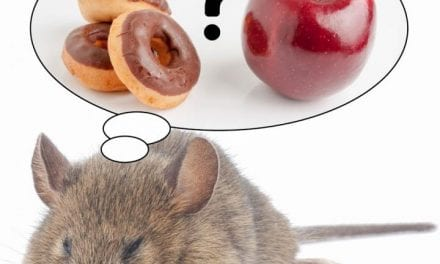 Direct Link Between REM Sleep Loss, Desire for Sugary Foods