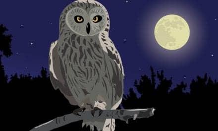 Gene Mutation Helps Explain Night Owl Behavior