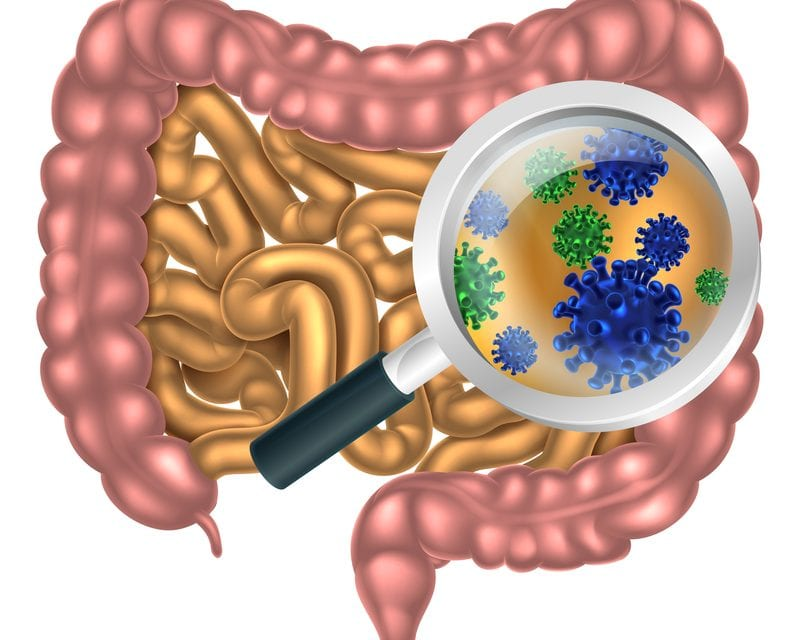 Gut Microbiome Differences in REM Sleep Behavior Disorder, Parkinson's, and Healthy Controls