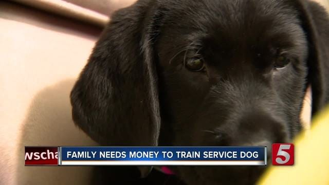 Family Needs Help Paying For Service Dog Training