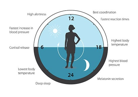 Nobel Prize in Medicine Awarded to 3 Americans for Circadian Rhythms Discoveries