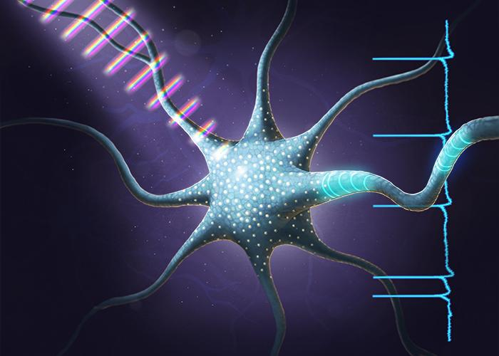 """""""Opto-ceuticals,"""" Treating Patients with Light Coherent Control, Could One Day Help Patients with Circadian Rhythm Disorders"""
