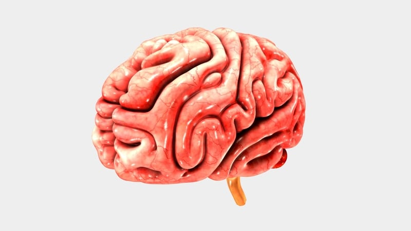 Sleep Apnea Study Finds Male, Female Differences in Cerebral Cortex Thickness