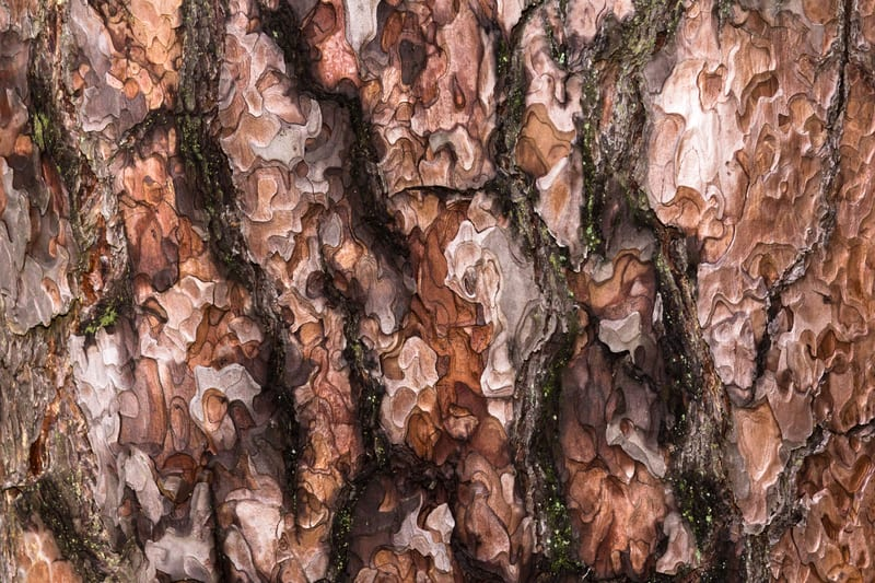 Pycnogenol French Maritime Pine Bark Extract Reduces Jet Lag, Study Finds