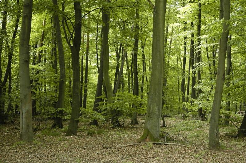 French Oak Wood Extract Enhances Sleep Quality in Insomnia