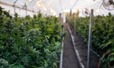 Canada Research Award Recipients to Learn More About Whether Cannabis Use Helps with Sleep Apnea, Weakens Immune Response, Alters Breathing Tests