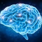 Researchers Take Aim at Circadian Clock in Deadly Brain Cancer
