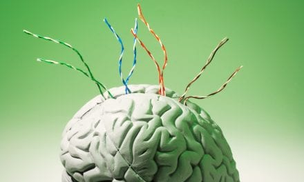 During Sleep, Immune Cells Rewire and Repair