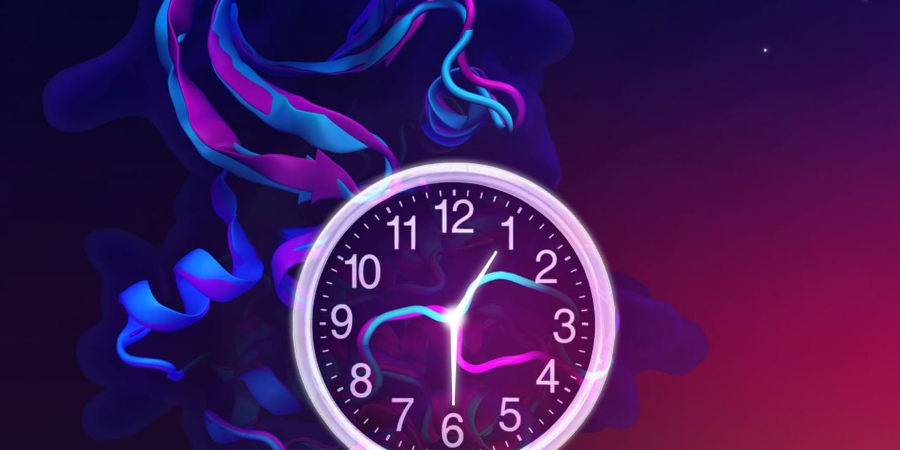 Sleep Phase Disorders and Biological Clock Proteins: Molecular Switch Mechanism Explains How Mutations Shorten Clocks