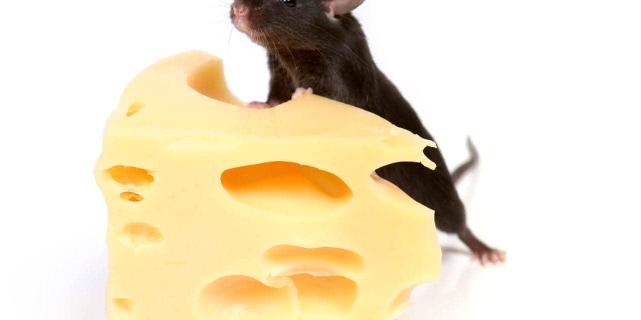 REM Sleep Modulates Future Food Intake in Mice