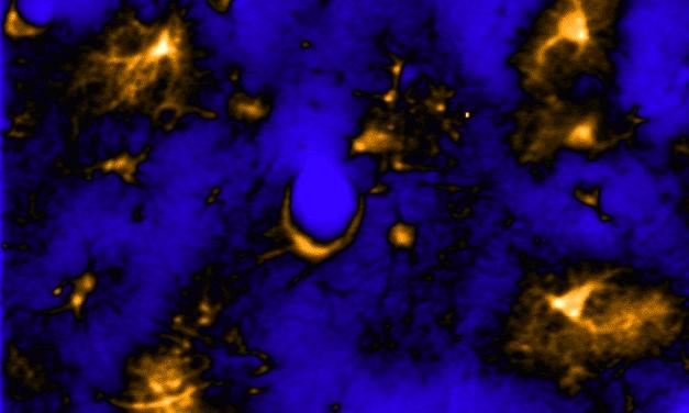 Do Astrocytes Change Dynamically Across Sleep & Wake States Like Neurons Do?