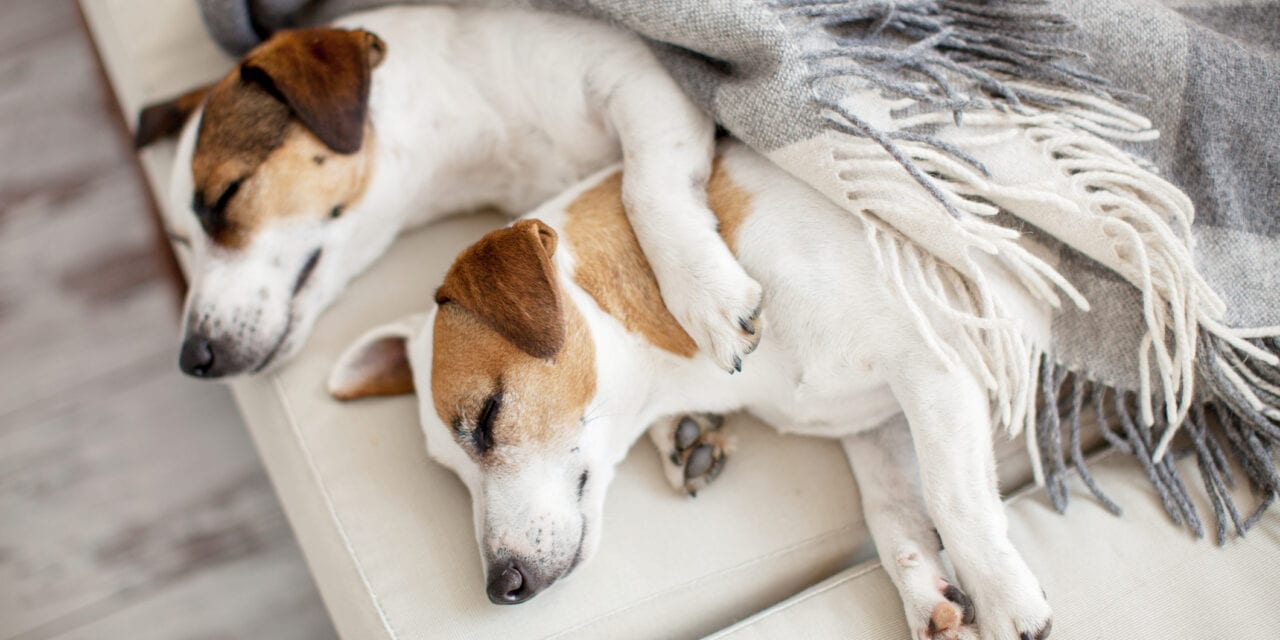 Study: Kids Who Sleep With Their Pet Still Get a Good Night's Rest