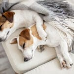 Smart Collar Adds Sleep Tracker for Dogs