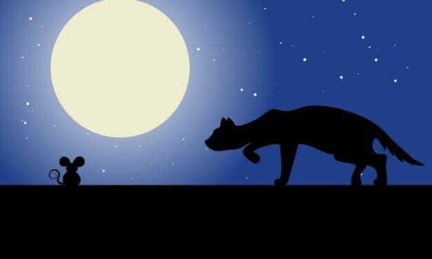How Stress & the Circadian Clock Affect Sleep