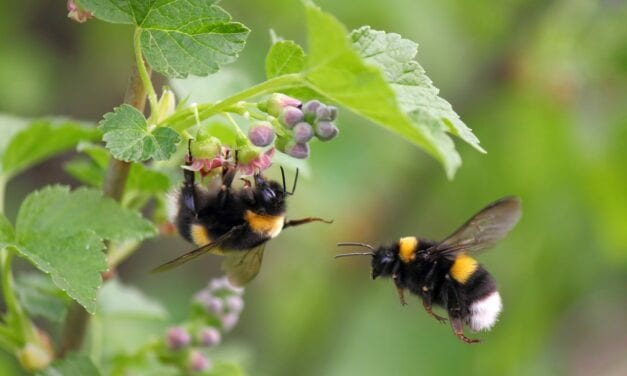 Common Pesticides Reduce Sleep Quantity in Insects