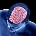 Brain Cortex May Regulate Need for Sleep